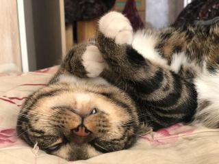 Фото: PRIMPRESS | Тест PRIMPRESS: Суровая кошка или нежный кот?