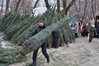 Фото: Игорь Новиков | Елка за копейки: как купить символ Нового года по минимальной цене