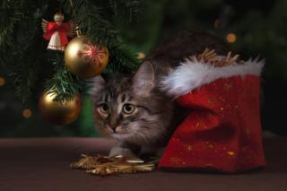 Фото: pixabay.com | Как выбрать новогоднюю искусственную елку?