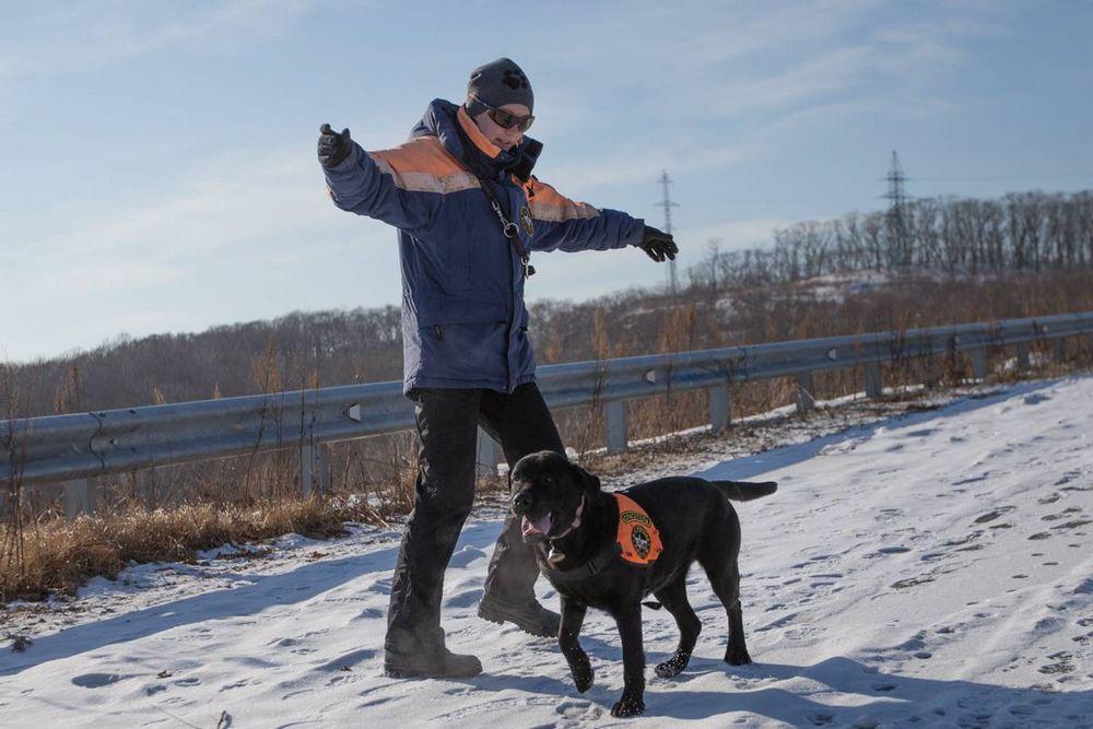 Во Владивостоке прошли учения собак-спасателей