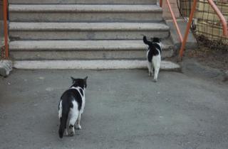 Фото: PRIMPRESS | В Приморье депутатыприняли новый закон, защищающий бездомных животных