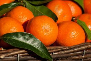 Фото: pixabay.com   Как выбрать правильные мандарины?