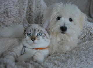 Фото: pixabay.com   Роспотребнадзор рассказал о смертельной опасности, которую несут домашние животные