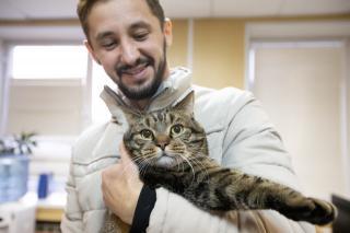 Фото: Татьяна Меель / PRIMPRESS   Всемирно известный кот Виктор из Владивостока похудел