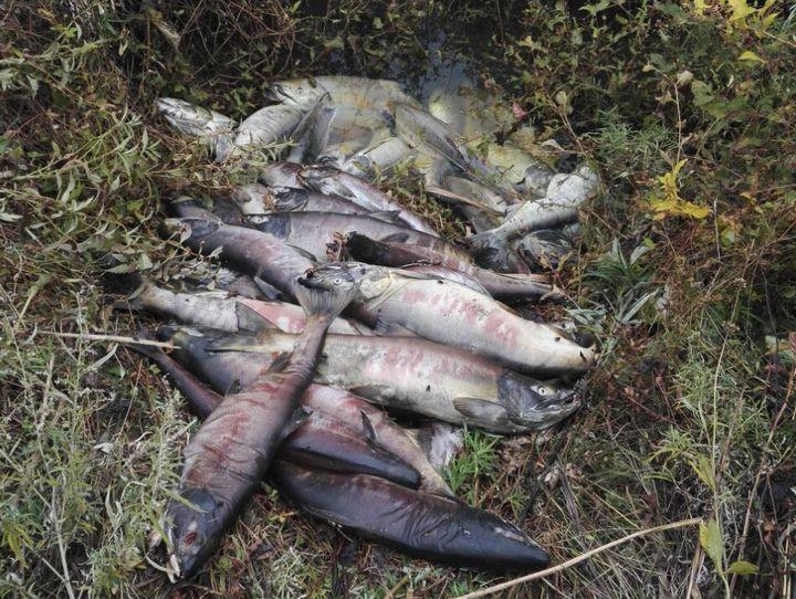Таможенники задержали браконьеров вПриморье