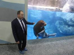 Фото:  | Морж Миша освоился в главном здании Приморского океанариума