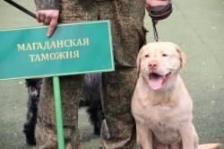 Фото: Никита Фролов   Соревнования таможенных кинологов прошли во Владивостоке