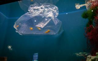 Фото: Приморский океанариум | Около 40 тропических рыб поселились в Приморском океанариуме