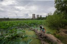 Фото: Татьяна Меель   В озерах под Владивостоком распускаются великолепные лотосы