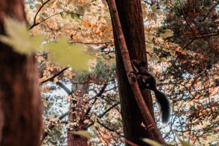 Фото: Артем Халупный | Яркие краски приморской осени