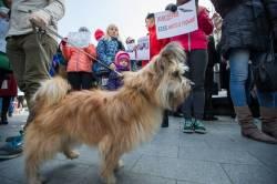 Фото:  | Владивостокцы вышли на пикет против хабаровских живодерок