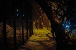 Фото:  | Снегопад накрыл Владивосток