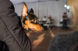 Фото:    Во Владивостоке выбрали «Пса Очарование-2016»