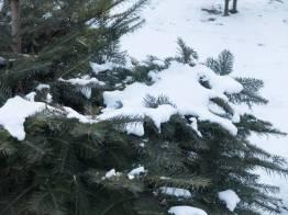 Фото:  | Во Владивосток пришла зима